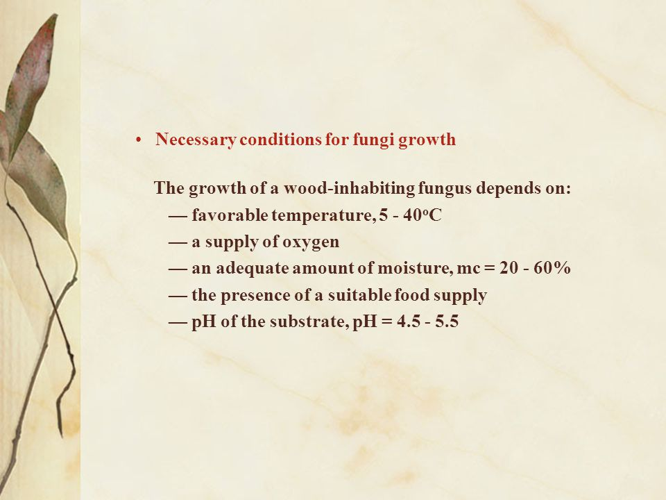 Necessary conditions for fungi growth