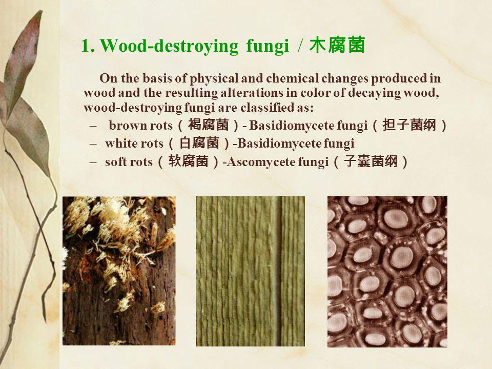 1. Wood-destroying fungi / 木腐菌