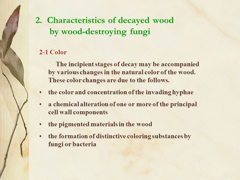 2. Characteristics of decayed wood by wood-destroying fungi