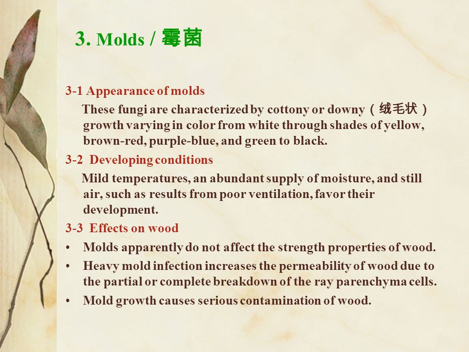 3. Molds / 霉菌 3-1 Appearance of molds