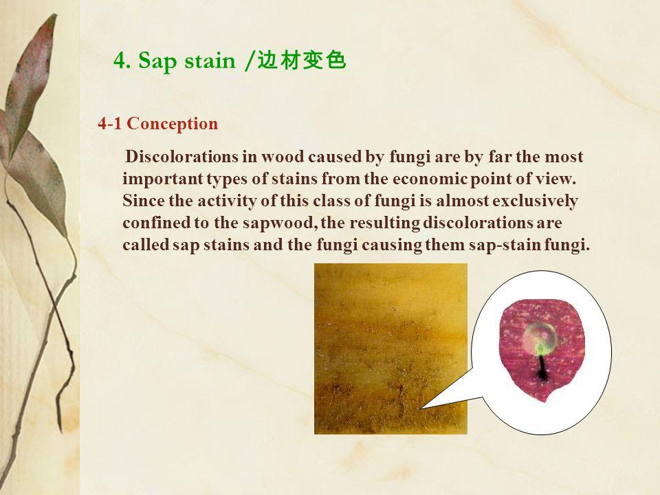 4. Sap stain /边材变色 4-1 Conception