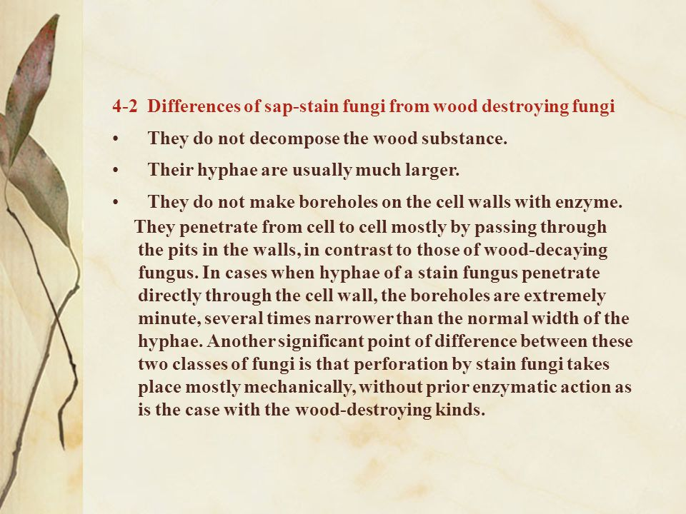 4-2 Differences of sap-stain fungi from wood destroying fungi