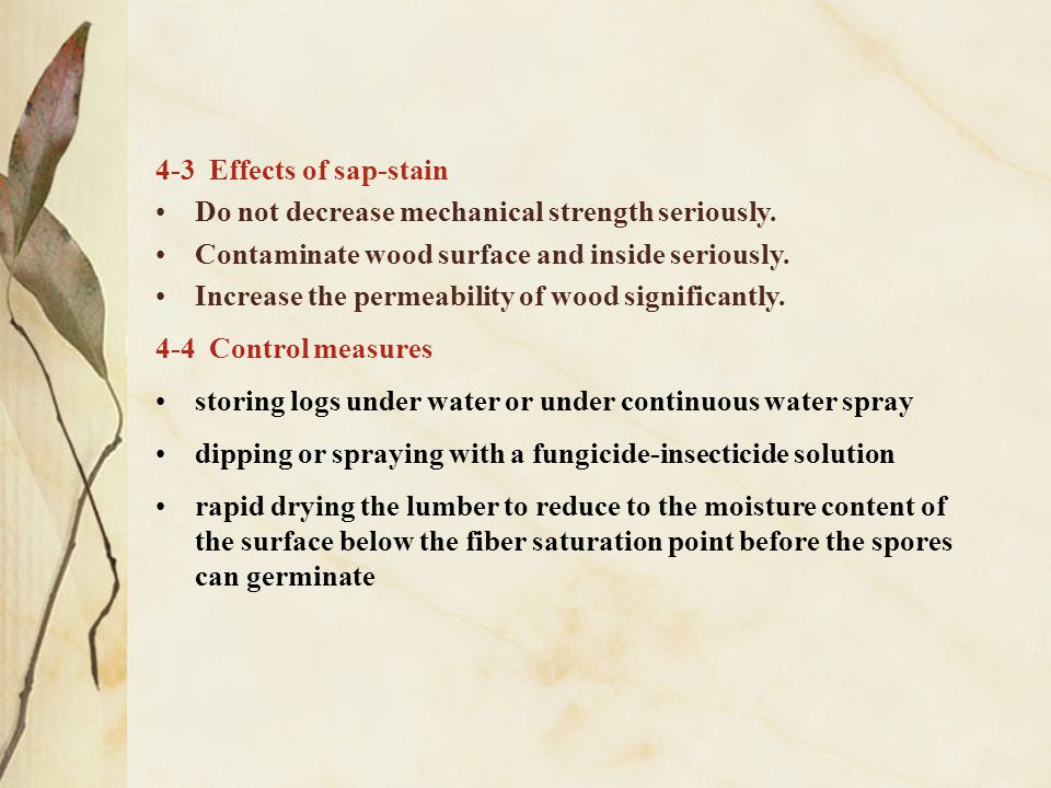 4-3 Effects of sap-stain Do not decrease mechanical strength seriously. Contaminate wood surface and inside seriously.