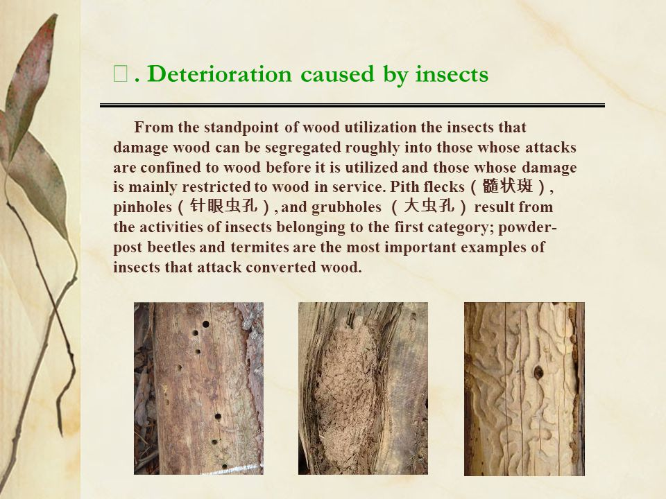 Ⅳ. Deterioration caused by insects
