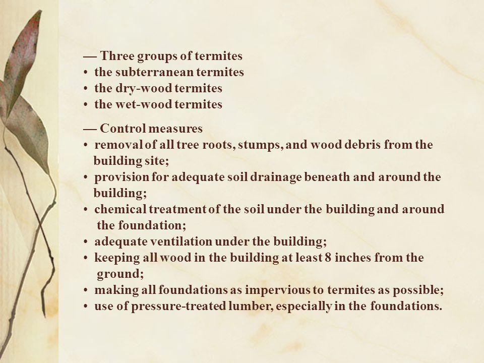 — Three groups of termites