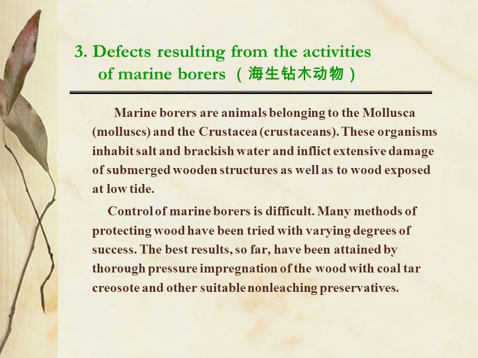 3. Defects resulting from the activities of marine borers (海生钻木动物)