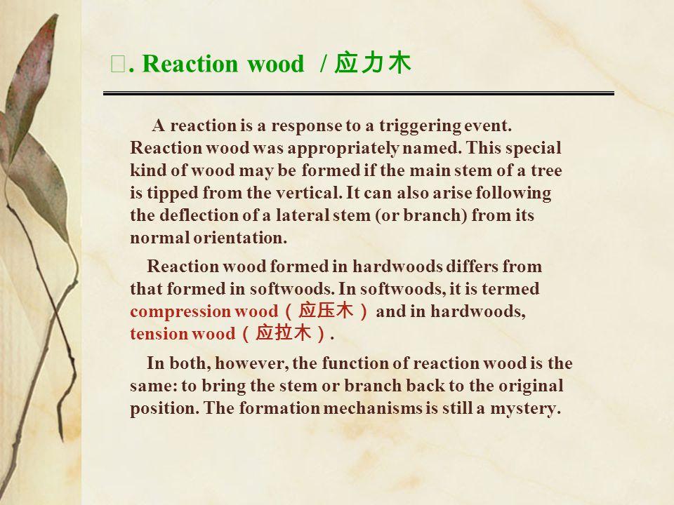 Ⅶ. Reaction wood / 应力木