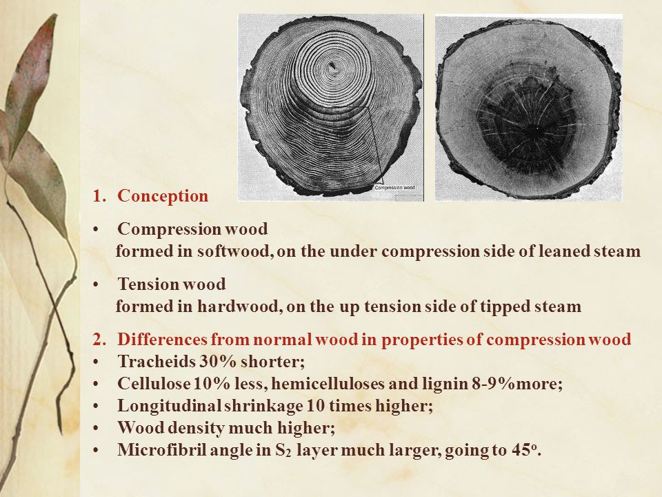 Conception Compression wood. formed in softwood, on the under compression side of leaned steam. Tension wood.