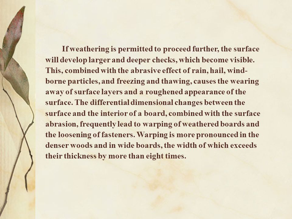 If weathering is permitted to proceed further, the surface will develop larger and deeper checks, which become visible.