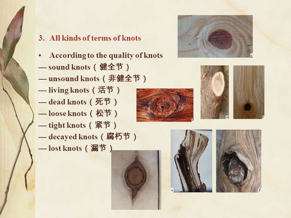 All kinds of terms of knots