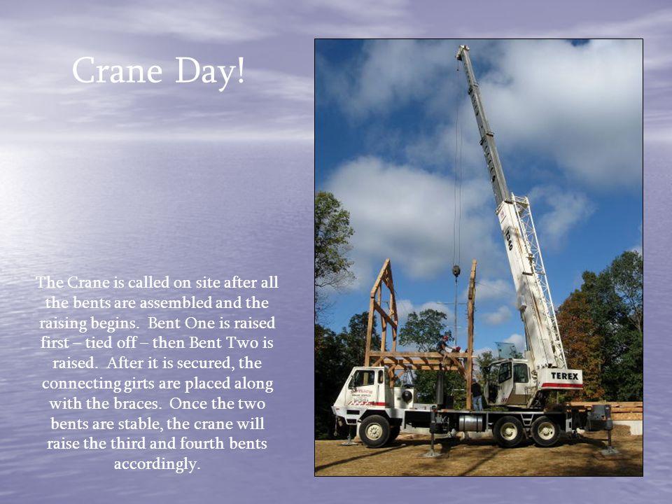 Crane Day!