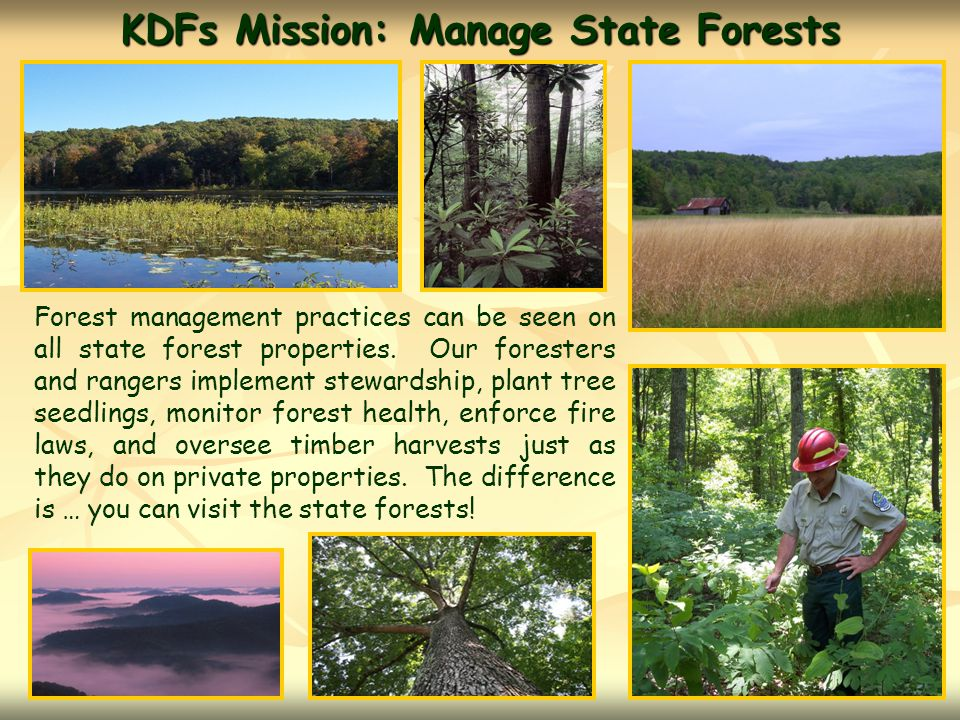 KDFs Mission: Manage State Forests