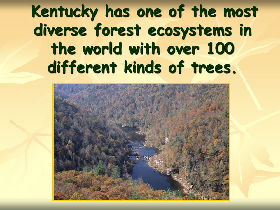 Kentucky has one of the most diverse forest ecosystems in the world with over 100 different kinds of trees.