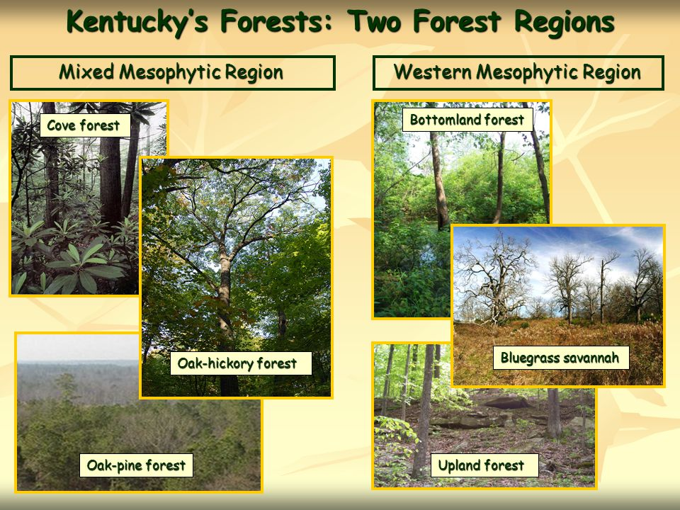 Kentucky's Forests: Two Forest Regions