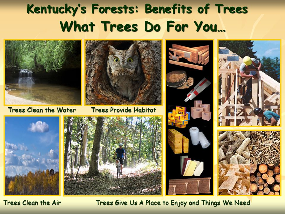 What Trees Do For You… Kentucky's Forests: Benefits of Trees