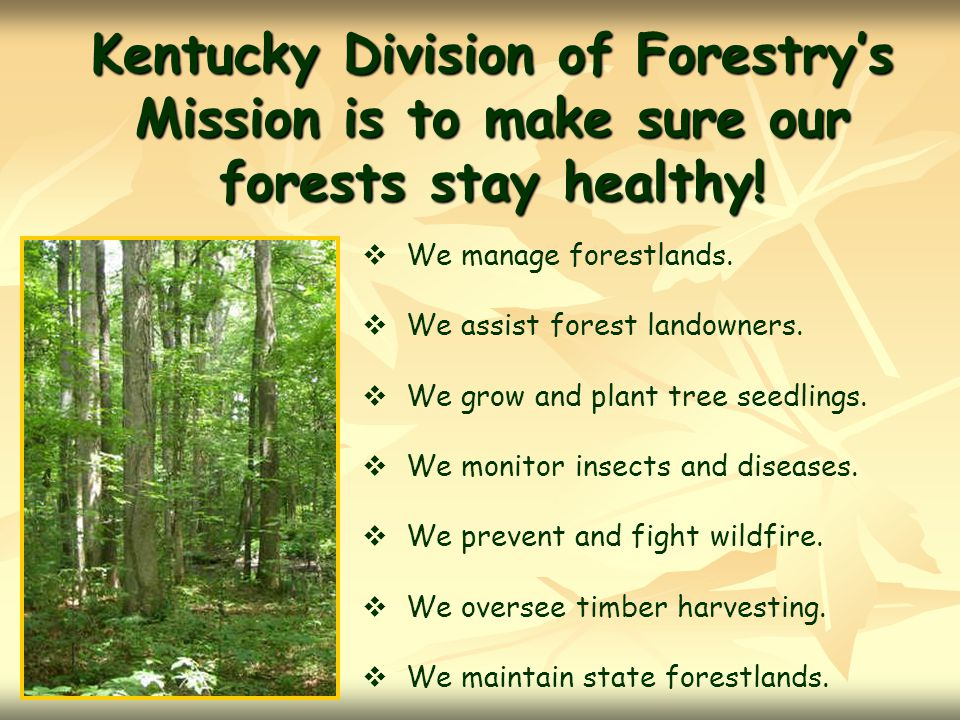 Kentucky Division of Forestry's Mission is to make sure our forests stay healthy!