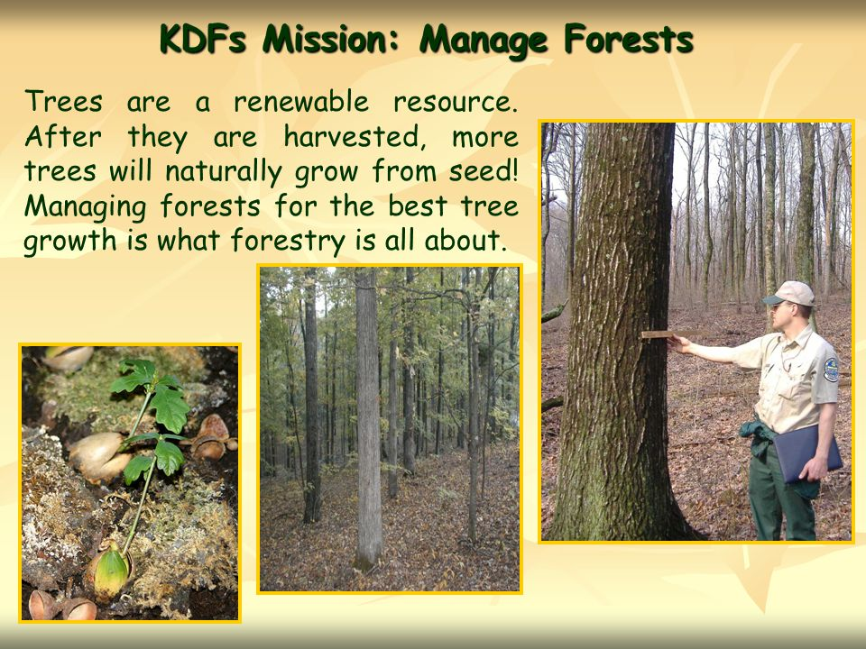 KDFs Mission: Manage Forests