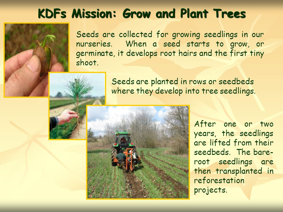 KDFs Mission: Grow and Plant Trees