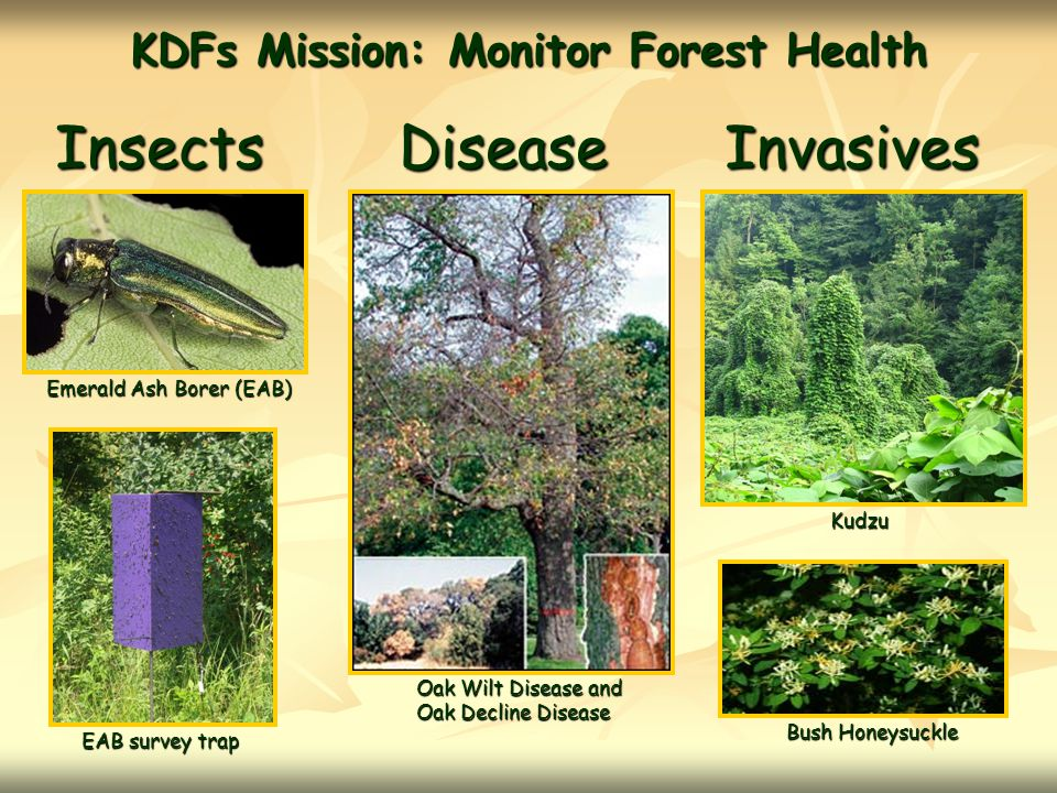 KDFs Mission: Monitor Forest Health