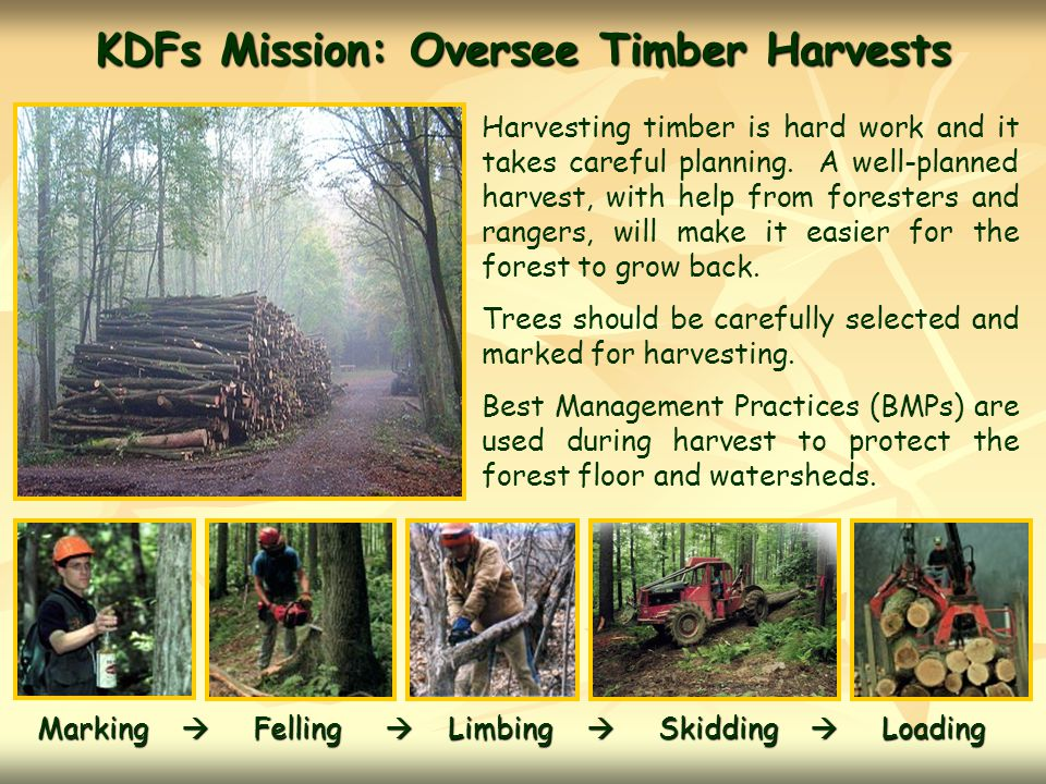 KDFs Mission: Oversee Timber Harvests