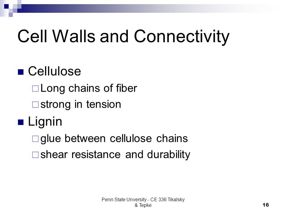 Cell Walls and Connectivity