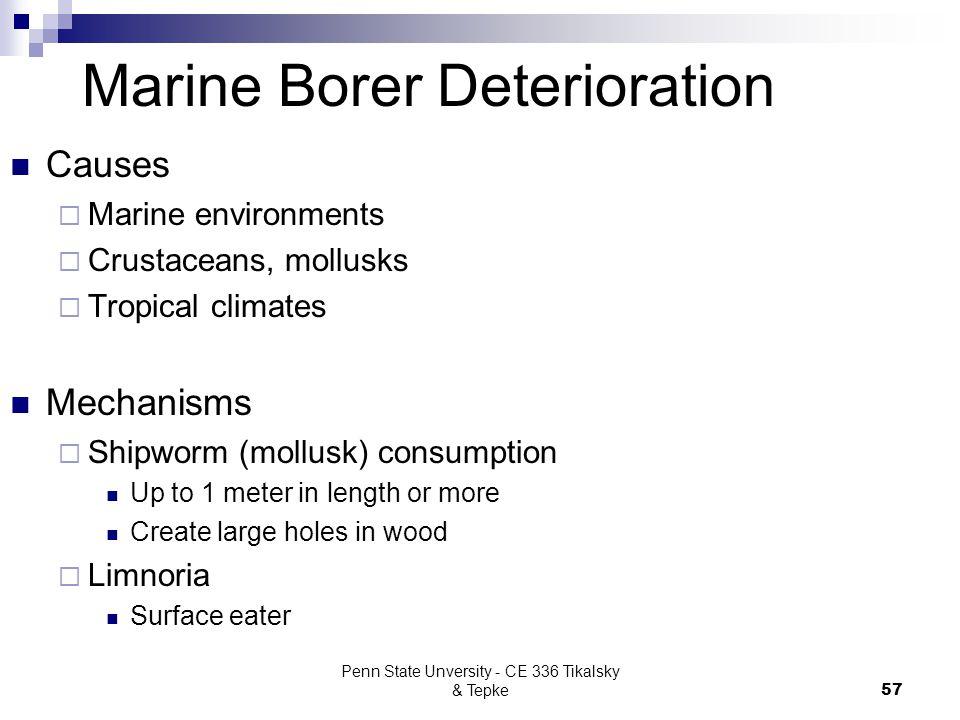 Marine Borer Deterioration
