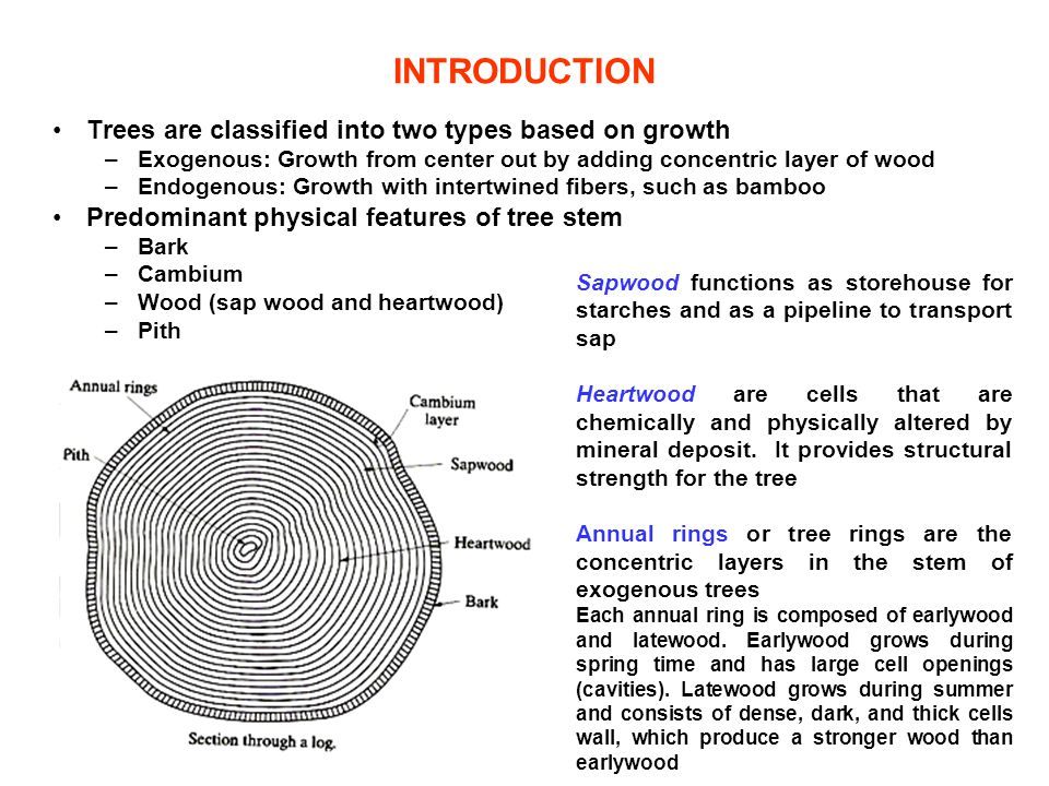 INTRODUCTION Trees are classified into two types based on growth