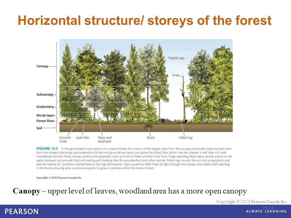 Horizontal structure/ storeys of the forest