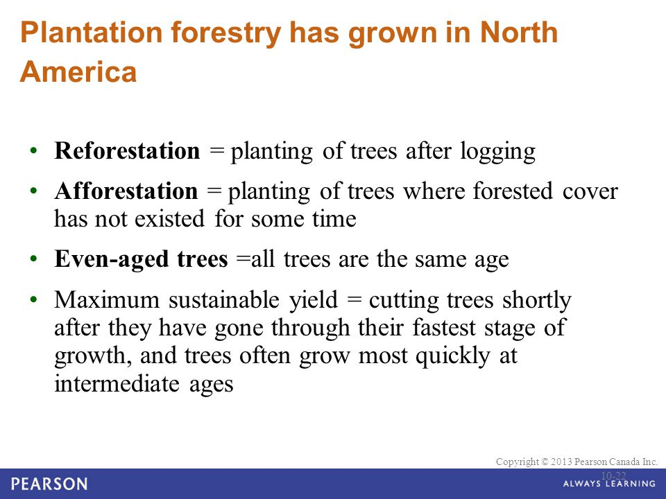 Plantation forestry has grown in North America