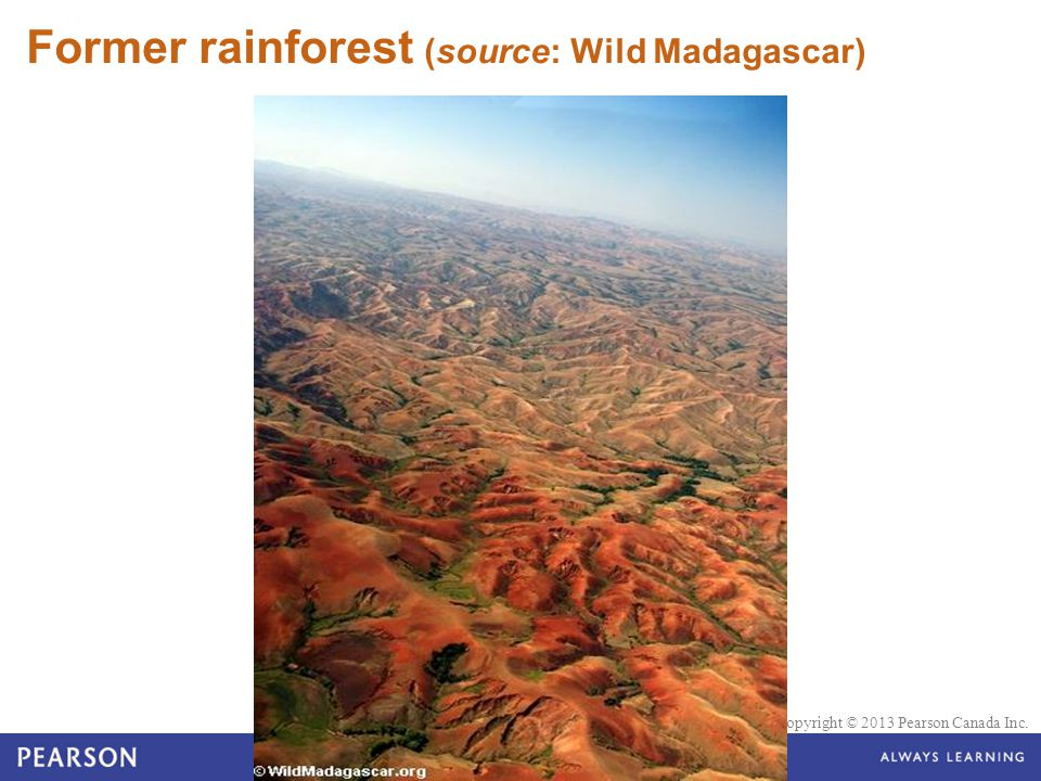 Former rainforest (source: Wild Madagascar)