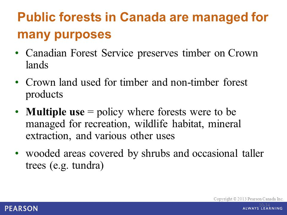 Public forests in Canada are managed for many purposes