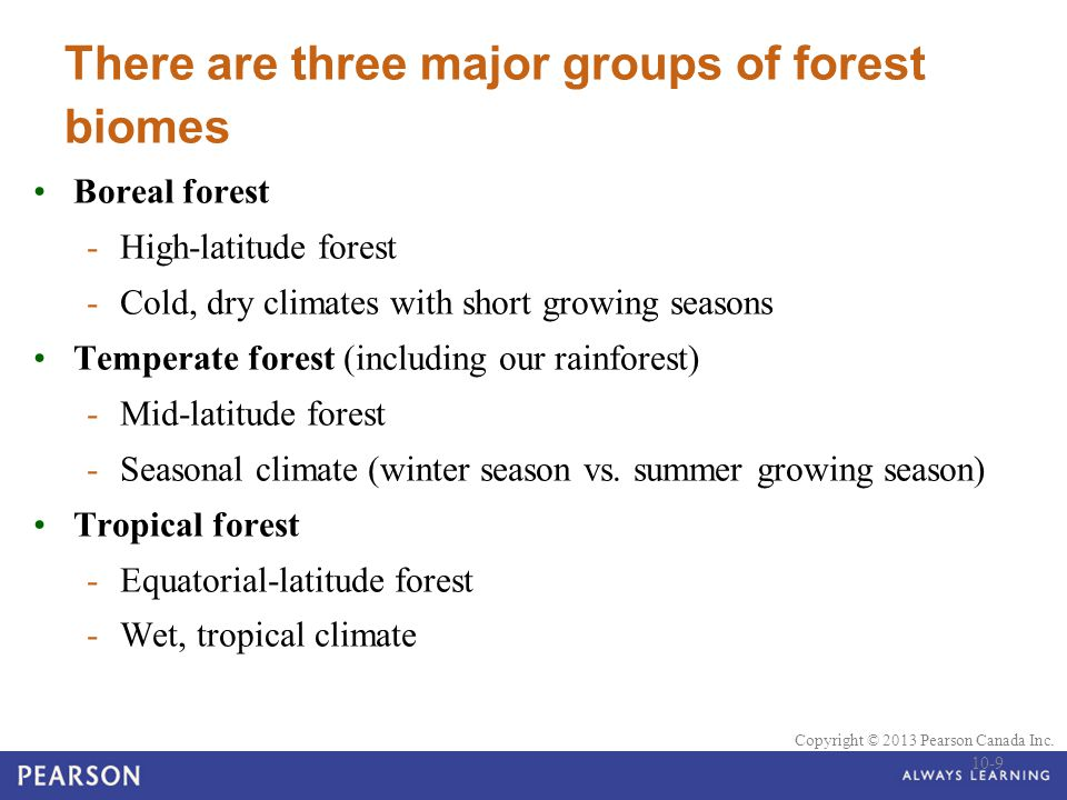 There are three major groups of forest biomes