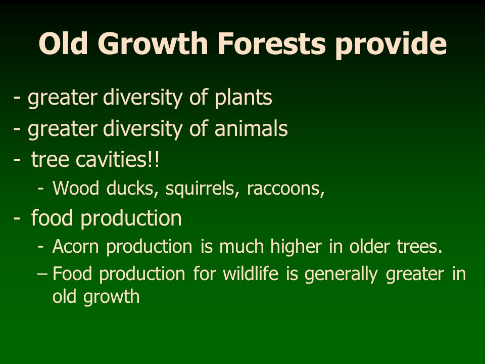 Old Growth Forests provide