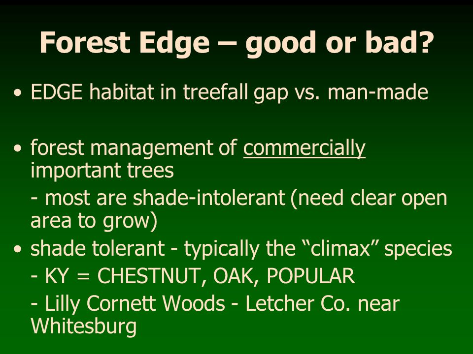 Forest Edge – good or bad