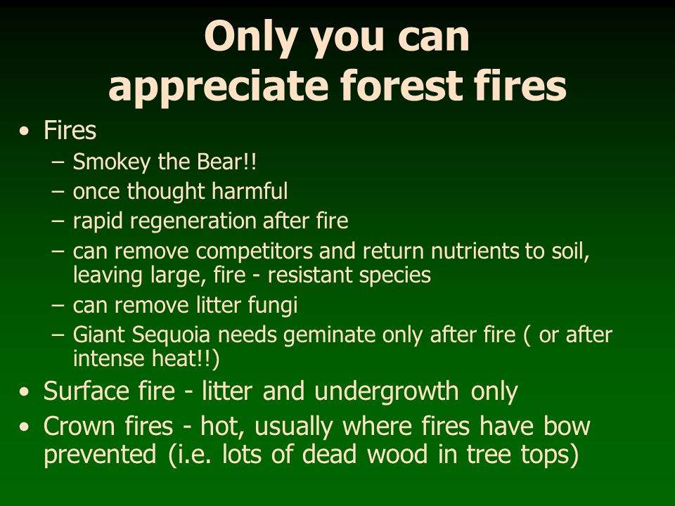 Only you can appreciate forest fires