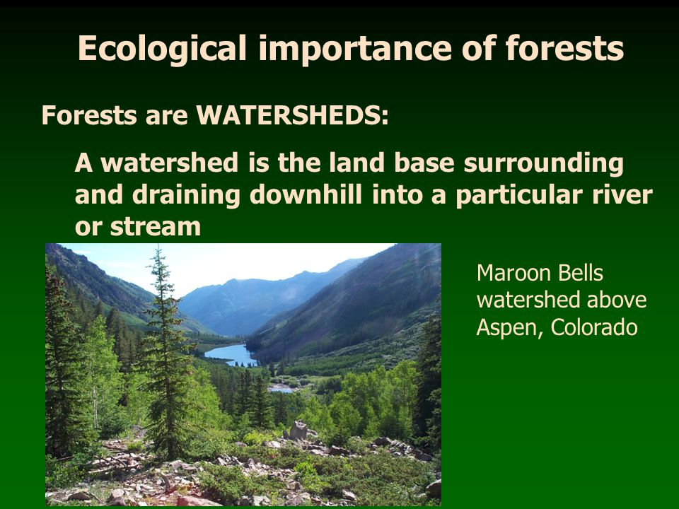 Ecological importance of forests