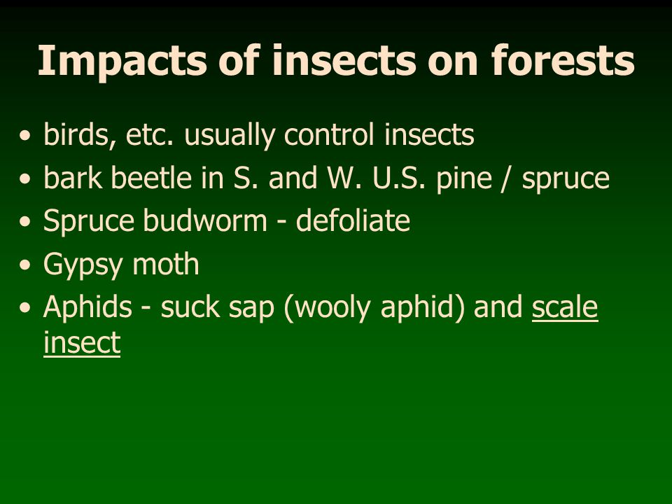 Impacts of insects on forests