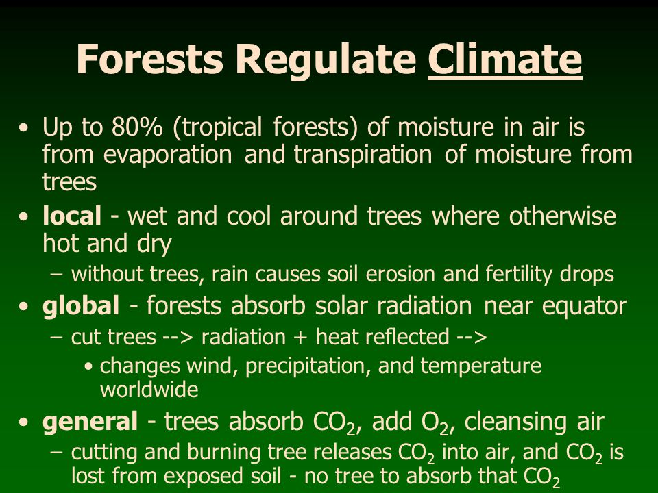 Forests Regulate Climate