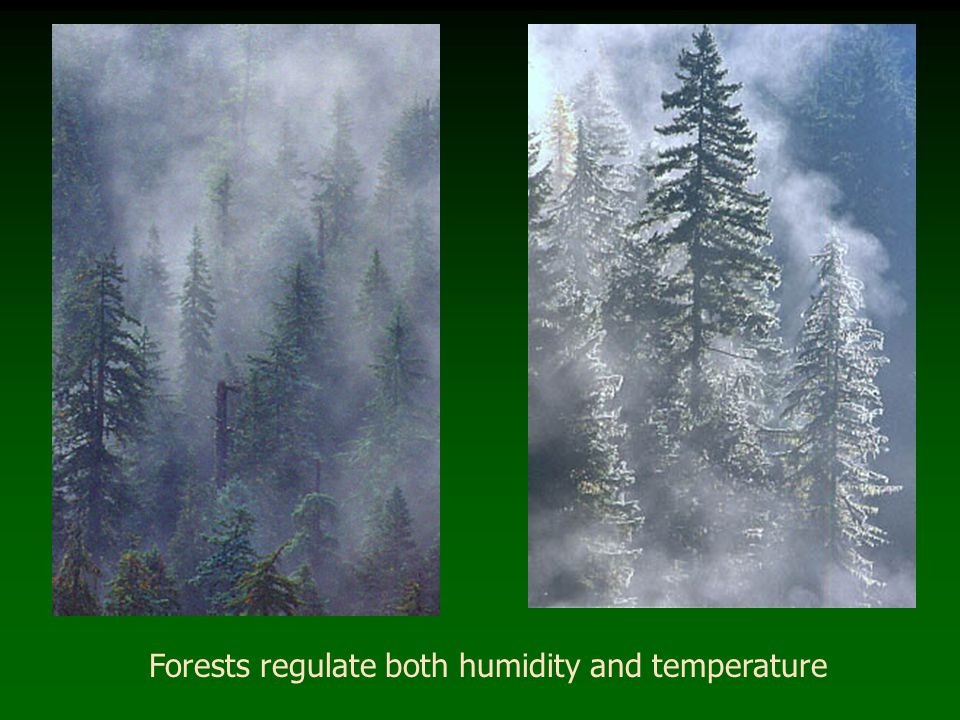 Forests regulate both humidity and temperature
