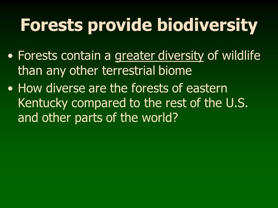 Forests provide biodiversity