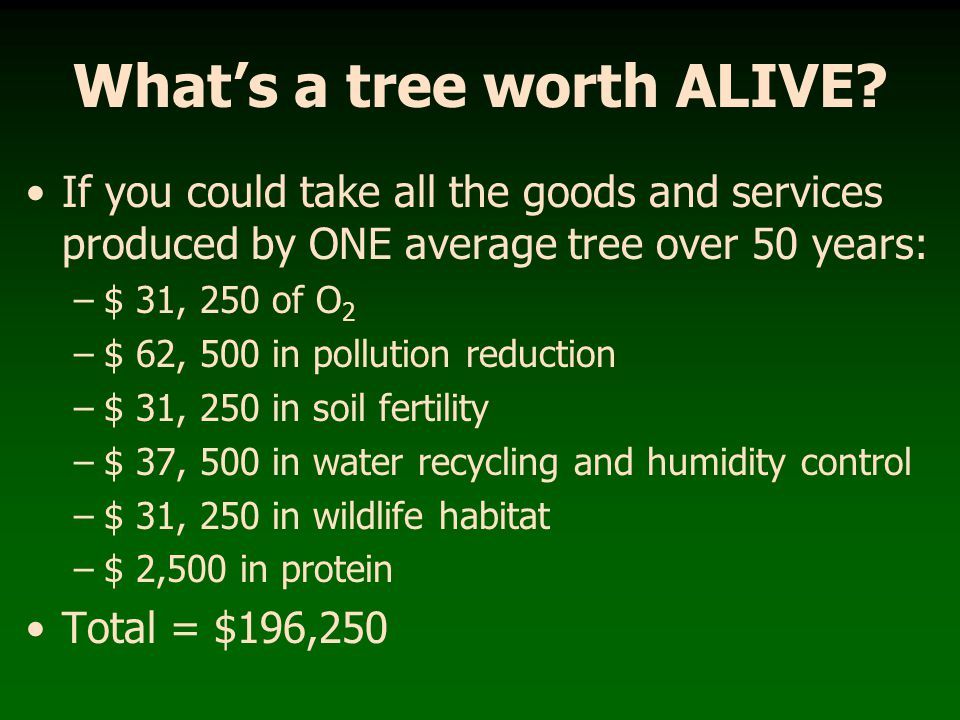 What's a tree worth ALIVE