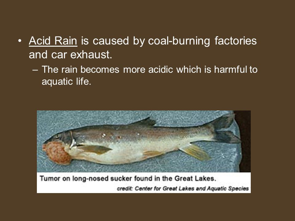 Acid Rain is caused by coal-burning factories and car exhaust.