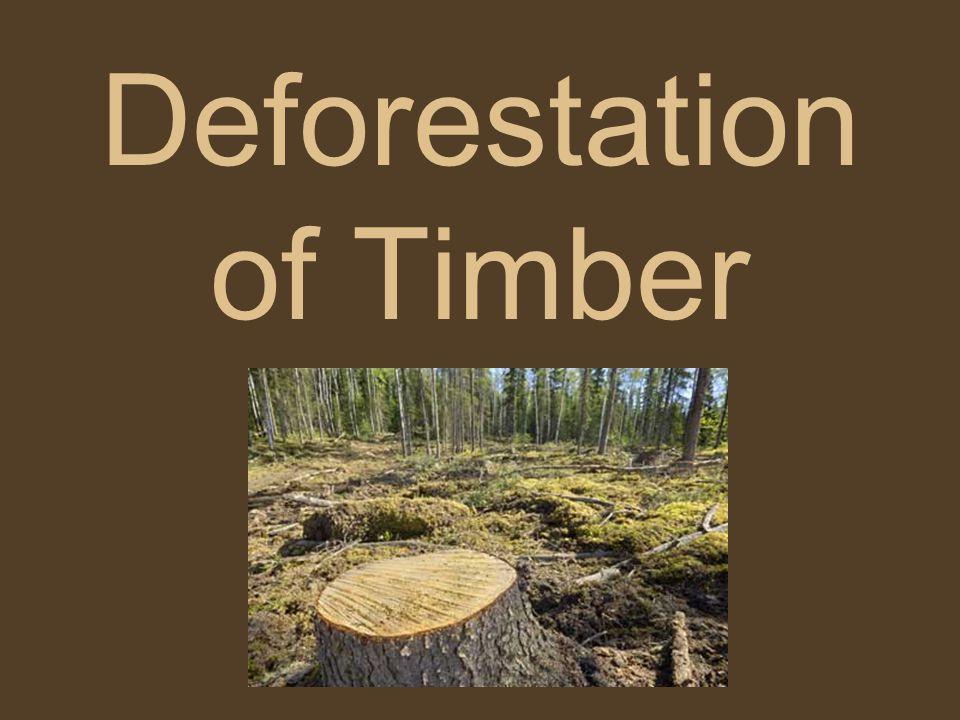 Deforestation of Timber