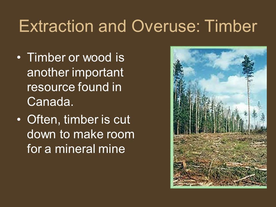 Extraction and Overuse: Timber