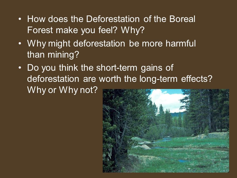 How does the Deforestation of the Boreal Forest make you feel Why