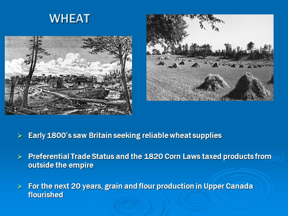 WHEAT Early 1800's saw Britain seeking reliable wheat supplies