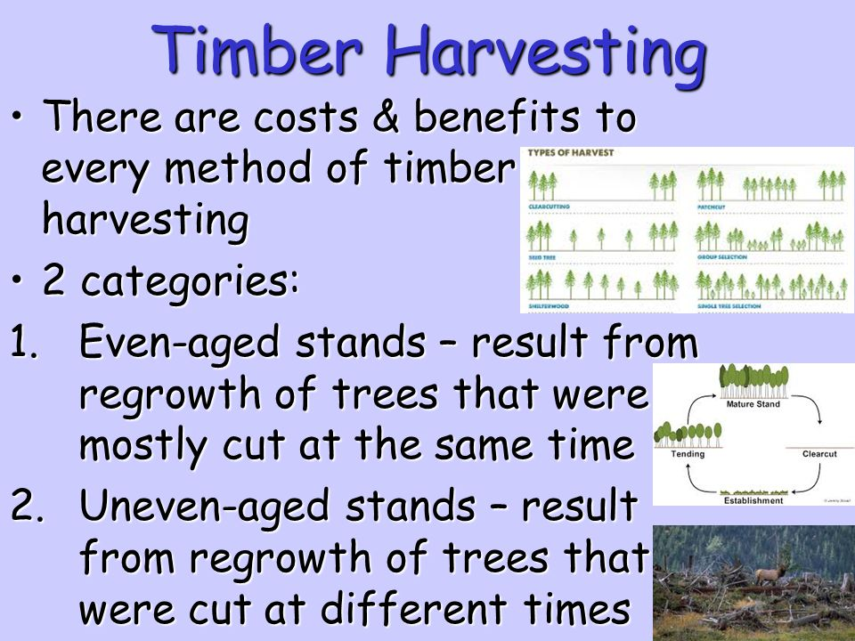 Timber Harvesting There are costs & benefits to every method of timber harvesting. 2 categories: