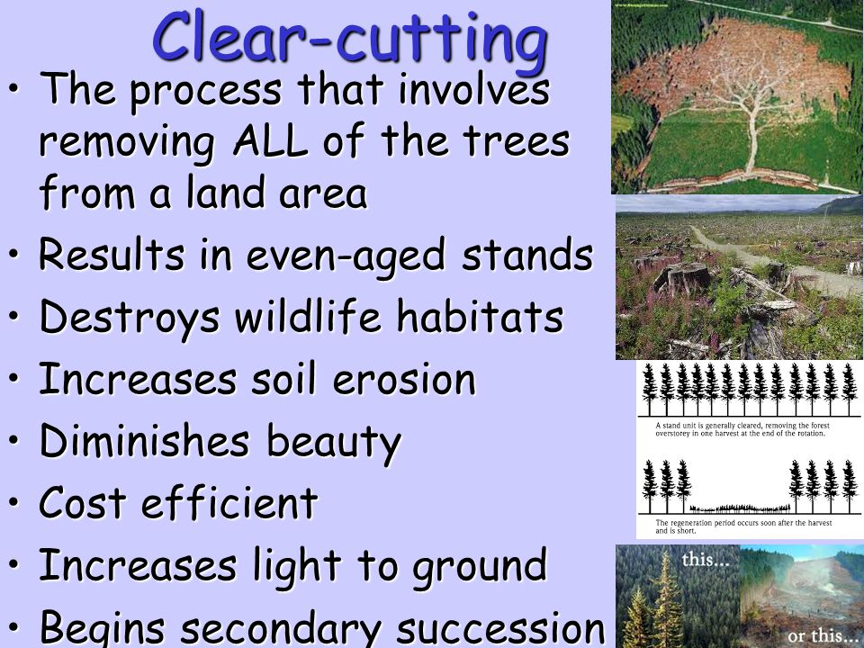 Clear-cutting The process that involves removing ALL of the trees from a land area. Results in even-aged stands.