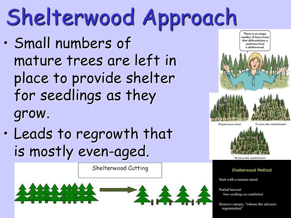 Shelterwood Approach Small numbers of mature trees are left in place to provide shelter for seedlings as they grow.