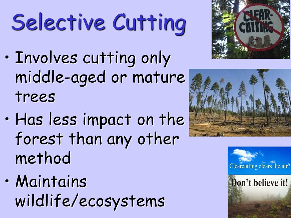 Selective Cutting Involves cutting only middle-aged or mature trees